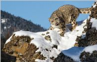 2014 National mEYE World Photographic Competition Winners Announced; Snow Leopard Photograph Wows Judges